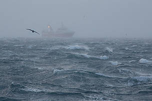 A bird flying over the icy waves and a trawler in the mist.